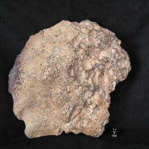 NWA 11107 Eucrite Melt Breccia Meteorites For Sale