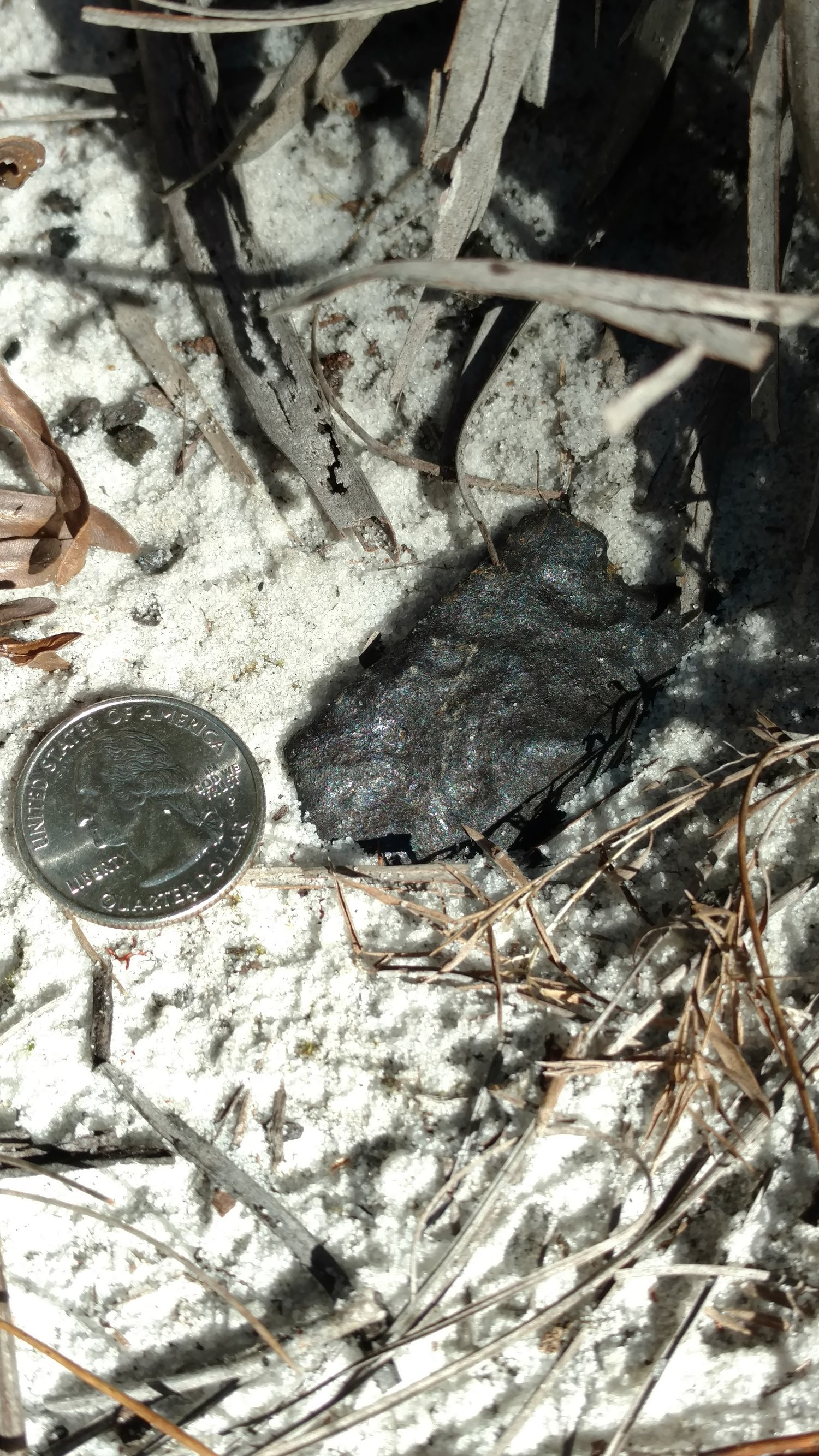 Osceola FL. 75.5g, 100% crusted found by Larry Adkins
