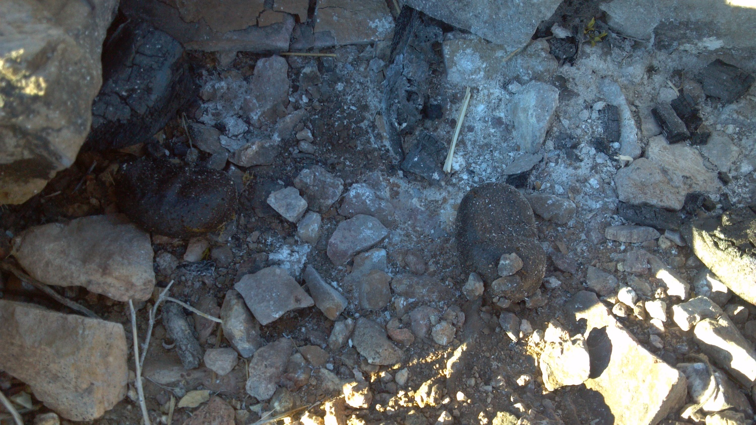 Burro feces in the fire pit. - Photo Larry Atkins