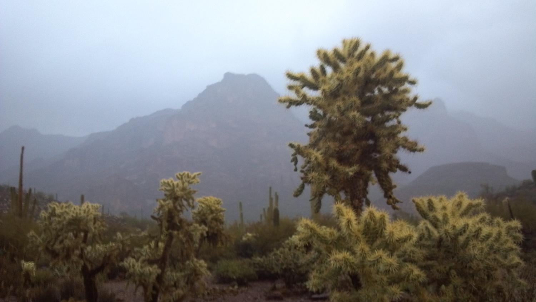 Cholla and Saguaro. - Photo Larry Atkins
