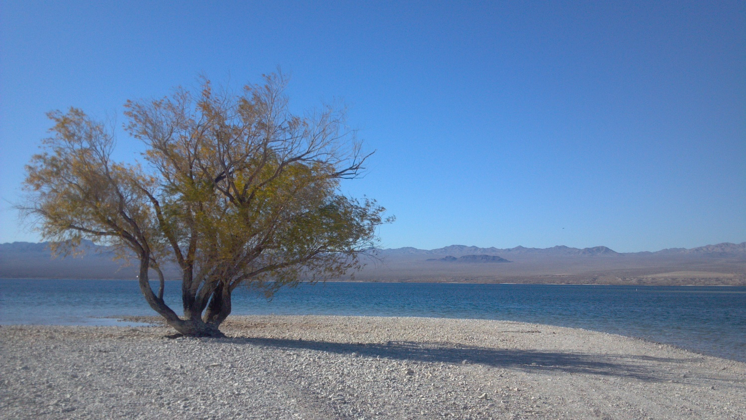 Looking across Lake Mohave to the Nevada side. Photo Larry Atkins