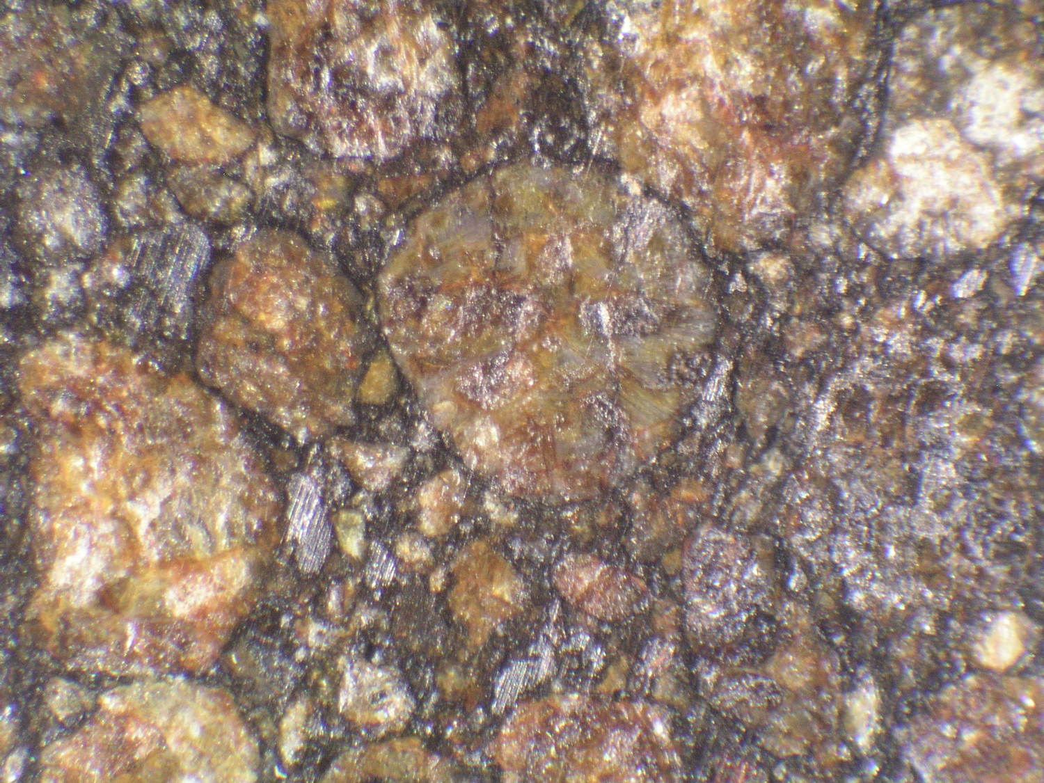 Photo Larry Atkins - meteorites under the scope study - misc.