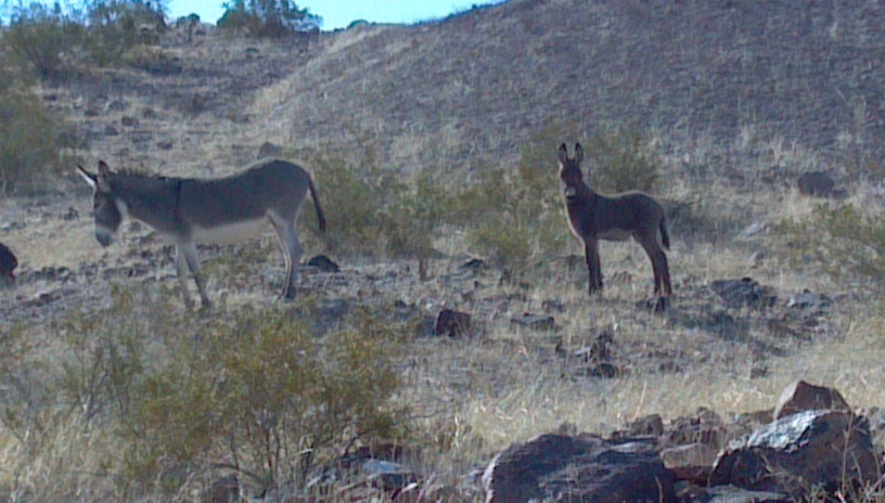 Bullhead City Residents. Descendants from the old days.
